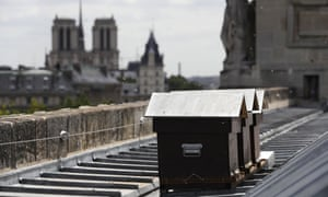Bees fly next to beehives set up by French beekeeper Audric de Campeau on the roof the Monnaie de Paris on 16 July 2017 in Paris.