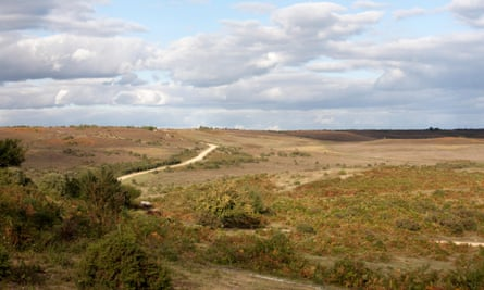 View across Hampton Ridge between Fritham and Frogham in the New Forest, Hampshire. The UK has many areas of lowland heath that are considered at-risk habitats.
