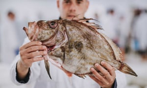 John Dory sold at Brixham Fish Market