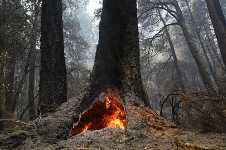 Fire burns in the hollow of an old-growth redwood tree in Big Basin Redwoods State Park on Monday.