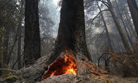 Fire burns in the hollow of an old-growth redwood tree in Big Basin Redwoods State Park, California, on 24 August.