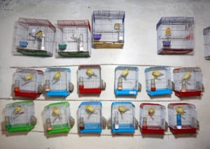 Kabul, Afghanistan Canary cages