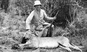 A lion shot during a hunt in 1910. Hunting and habitat pressure have both contributed to the decline in the cats' genetic strength.