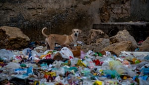 Young environmental photographer of the year: Syed Umer Hasan for 'Karachi Wildlife' As one of the world's fastest growing cities, Karachi is facing a crisis with stray dogs. Hundreds of them are being poisoned, spurring animal rights activists to condemn the killings. At the same time, thousands of people in the city are suffering from dog bites.