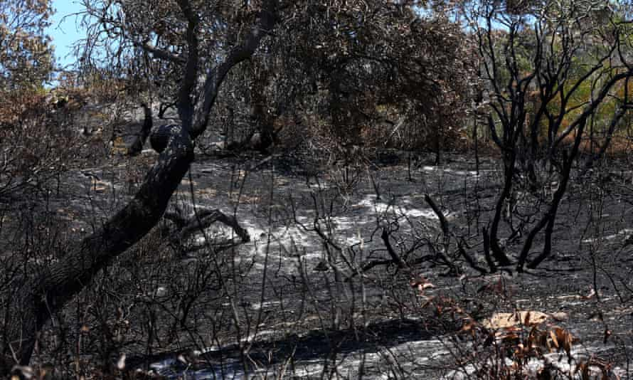 Bushfire damage outside the Cathedrals camping ground on Fraser Island