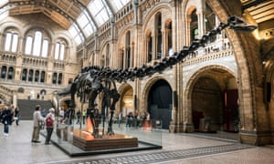 A cast of Diplodocus at the Natural History Museum in London. The original skeleton is in the US but that does not make this exact replica a fake.