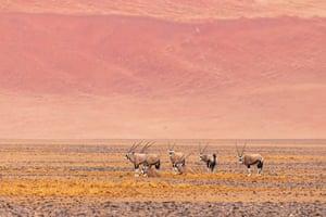 Oryx on scrubland