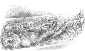 Illustration by Günter Grass