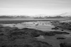 Wetlands in northern Mongolia