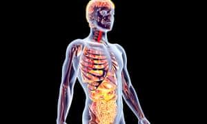3D rendered anatomical illustration.
