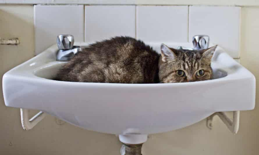 Ig Nobel laureate Marc-Antoine Fardin's study argues that that cats can be regarded as simultaneously solid and liquid due to their ability to adopt the shape of their container.