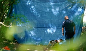 A police forensics dog searches the hedgerow of a field in Pershore.
