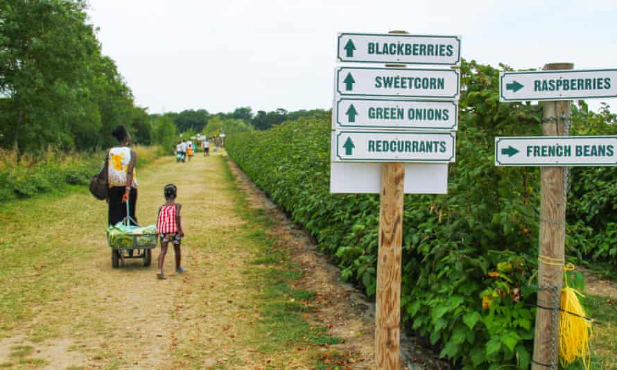 Mother and daughter walk through a plantation at the Pick you Own Parkside farm, Enfield.