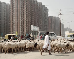 India, 2015A shepherd searches for a place to graze his flock, despite farmlands being acquired and sold to real estate developers. As townships grow, where there were once 216 villages, only 15 to 20 remain.