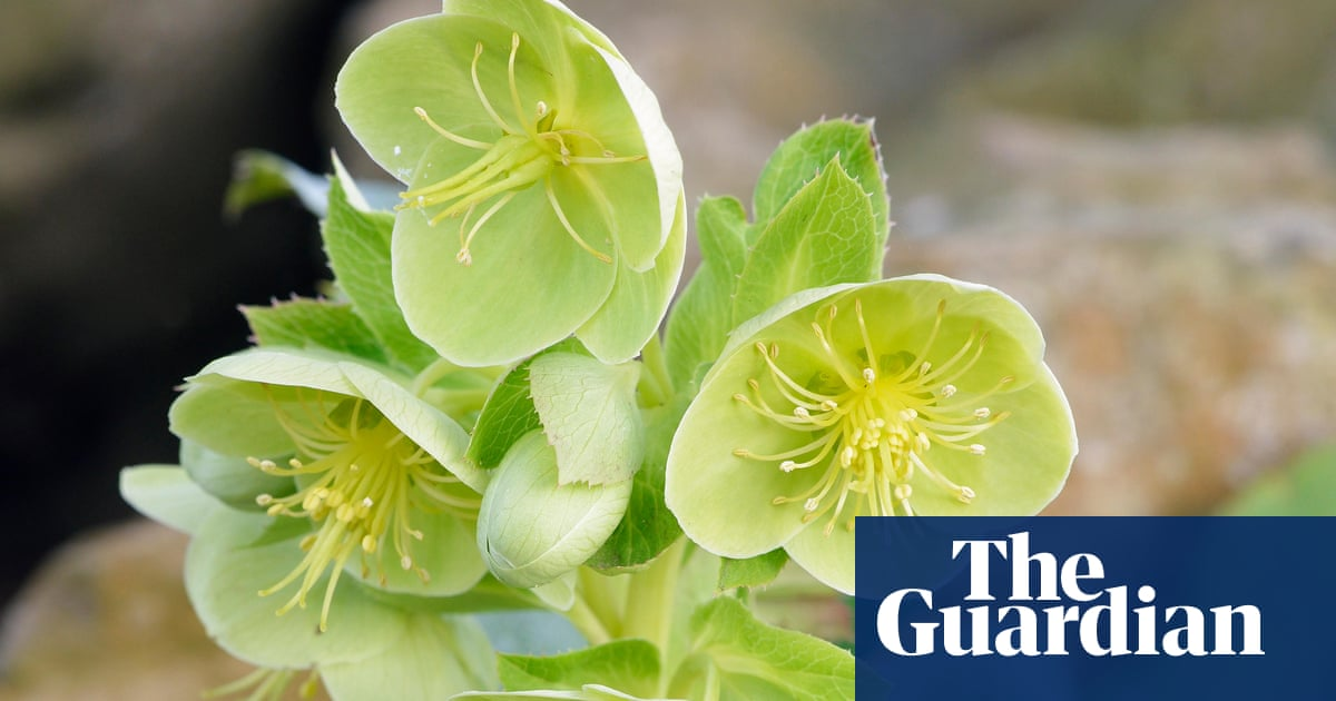 gardening tips mulch your border flowers life and style the guardian