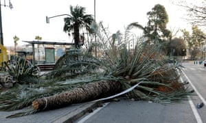 A view of a fallen palm tree on the road in Valencia, Spain.