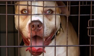 A pitbull. The HSCIC data showed a 6.5% year-on-year increase in the number of people requiring inpatient treatment for injuries inflicted by dogs.