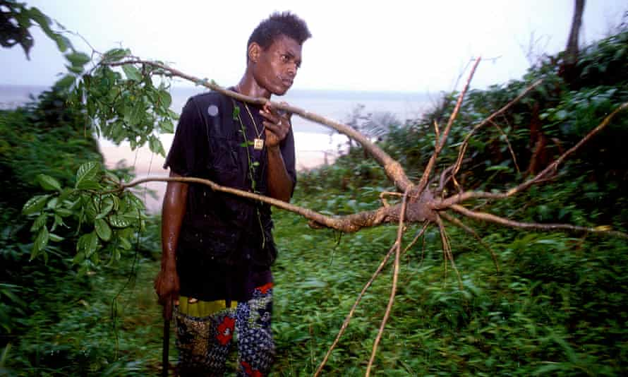 Root of the problem: a Gabonese man with an iboga shrub from which ibogaine is harvested.