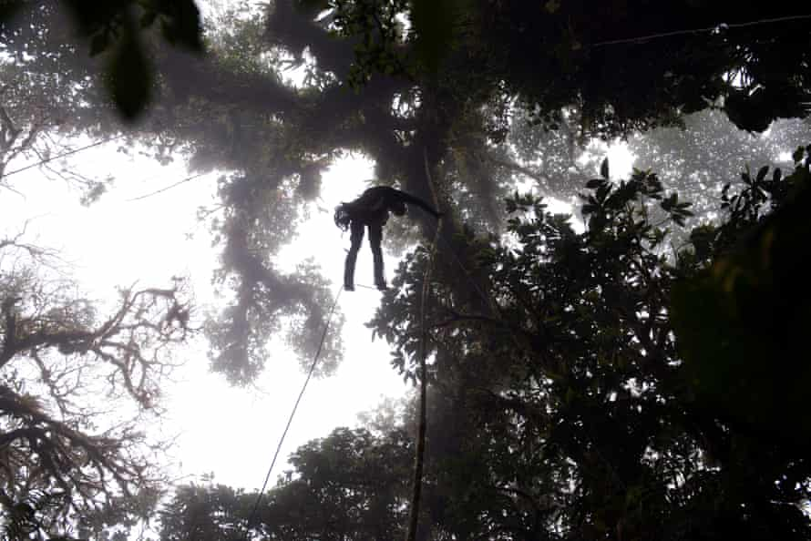 Nadkarni in the cloud forest