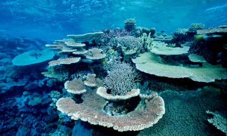 Coral bleaching on the Great Barrier reef, Australia
