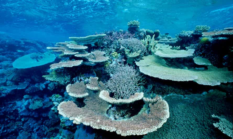 Bleached coral skeleton