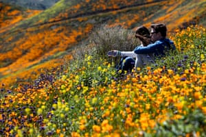 A couple sits in the poppy fields near Lake Elsinore