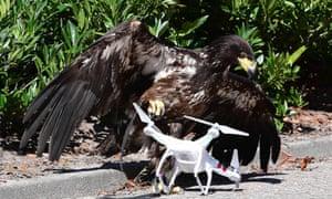 Dutch police eagles