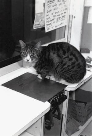Huston, the cinema's cat, 1987