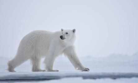 David Attenborough's Our Planet