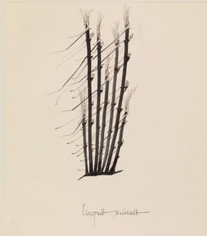 "Tolkien's ""grass in the wind"" drawing, dating from the 1960s. The image has never been on public display before."
