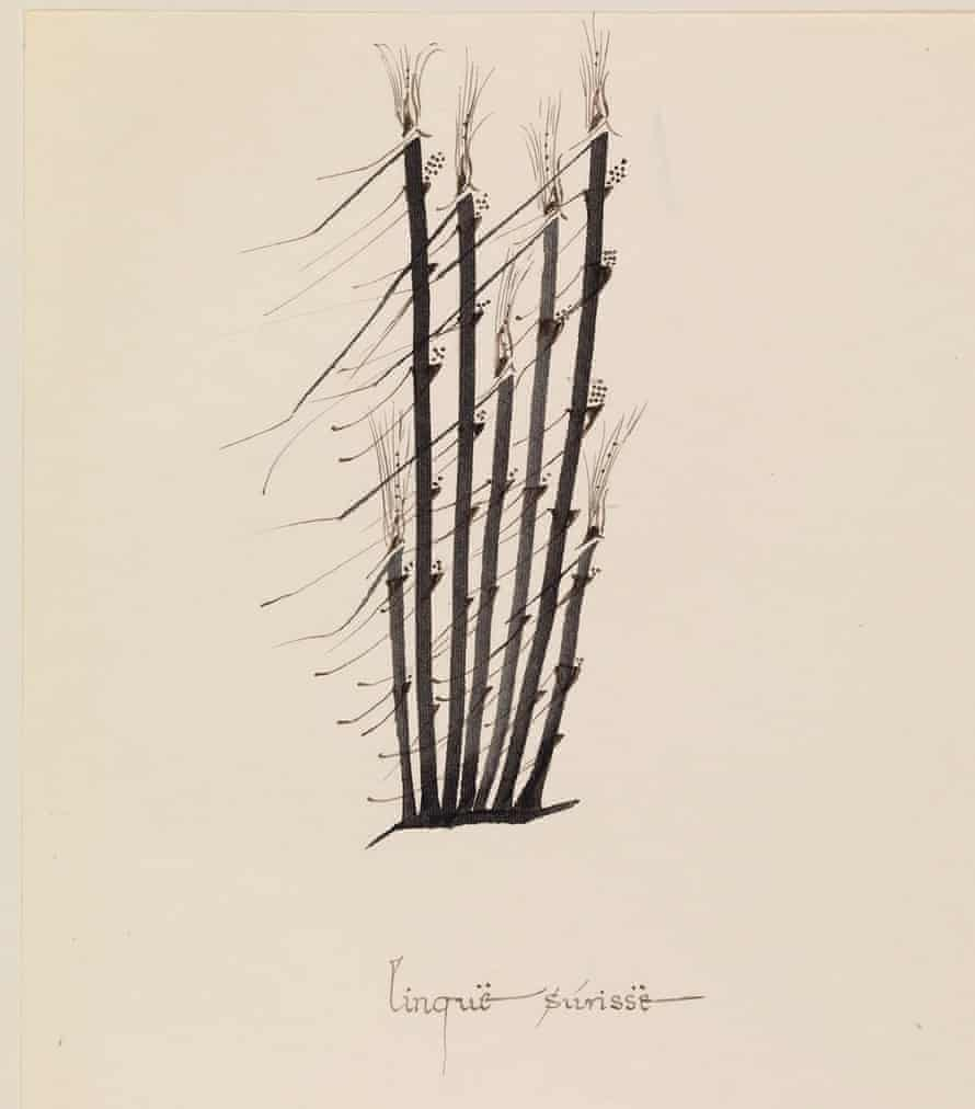 """Tolkien's """"grass in the wind"""" drawing, dating from the 1960s. The image has never been on public display before."""