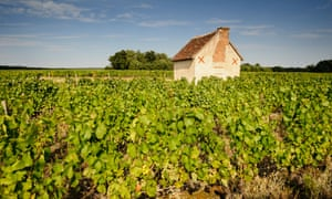 Sauvignon Blanc grapes may be the speciality of the Loire, but there's rather a lot more to discover.