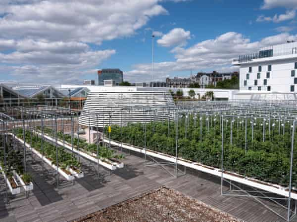 theguardian.com - Jon Henley - The future of food: inside the world's largest urban farm - built on a rooftop