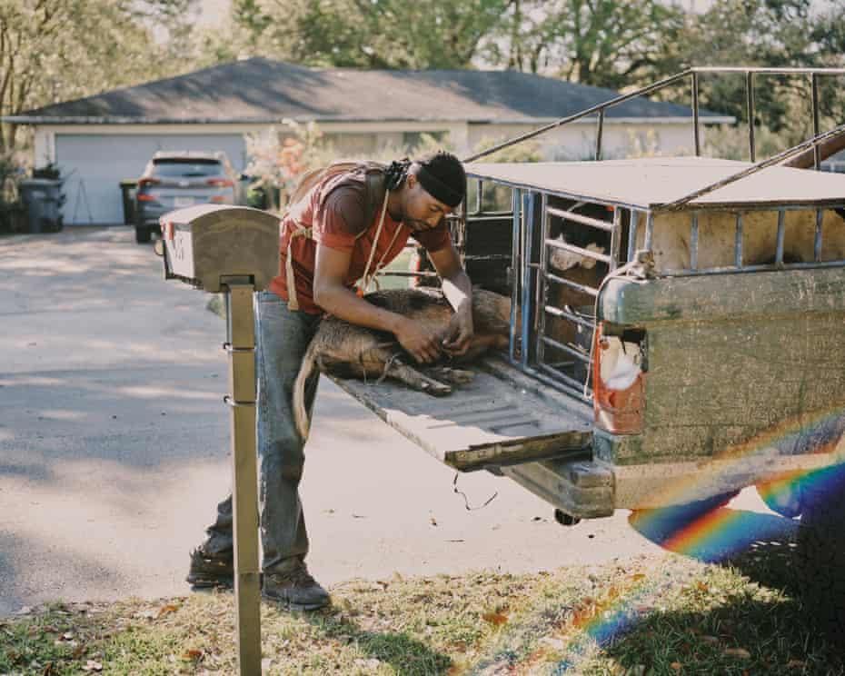 Pompi Rodriguez unties the feral hog as he prepares to transport it in Poinciana, Florida.