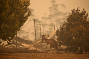 A kangaroo in the ruins of a burnt home in Gannet Place Batemans Bay, 1 January 2020.