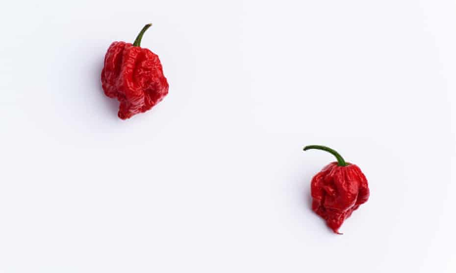 Carolina Reaper Hot Chilli Peppers: 'You can effectively map your GI tract by feeling how it moves.'