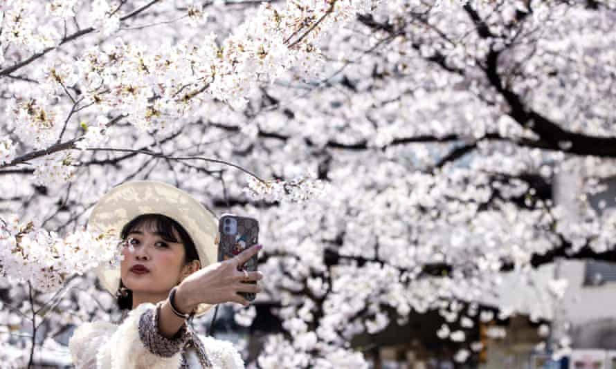 Woman takes selfie with cherry blossom in Tokyo, Japan