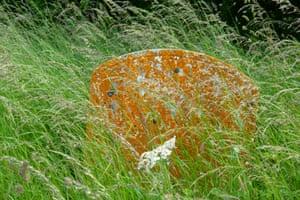 A lichen-covered gravestone in All Saints churchyard, Segenhoe