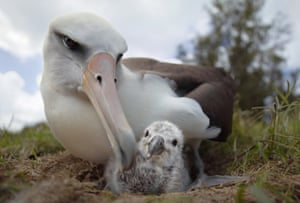 A still from Albatross, a film by Chris Jordan shot on Midway Atoll in the North Pacific Ocean