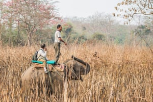 A scout team heads out to a location in Chitwan national park to identify a rhino for the translocation.