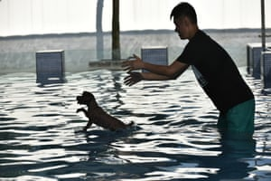 An owner plays with his pet dog in the shallow end of the pool