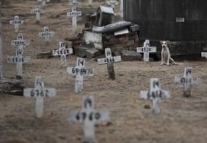 A dog sits next to numbered crosses at the Iraja cemetery, where many Covid-19 victims are buried in Rio de Janeiro.
