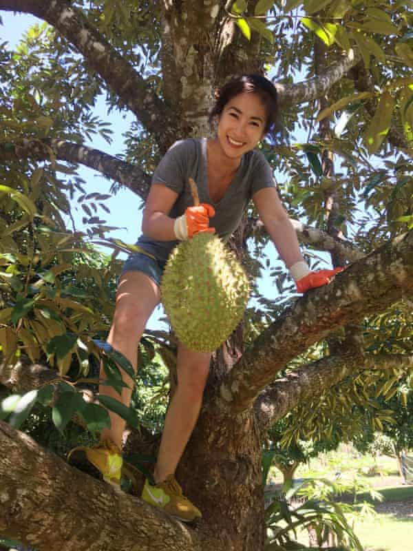 Palisa Anderson scales a tree in Far North Queensland to harvest durian