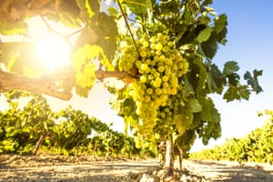 Natural wines are generally those that are free of chemicals, artificially introduced yeasts and added sulphur.
