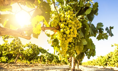 Make a clean break with natural wines