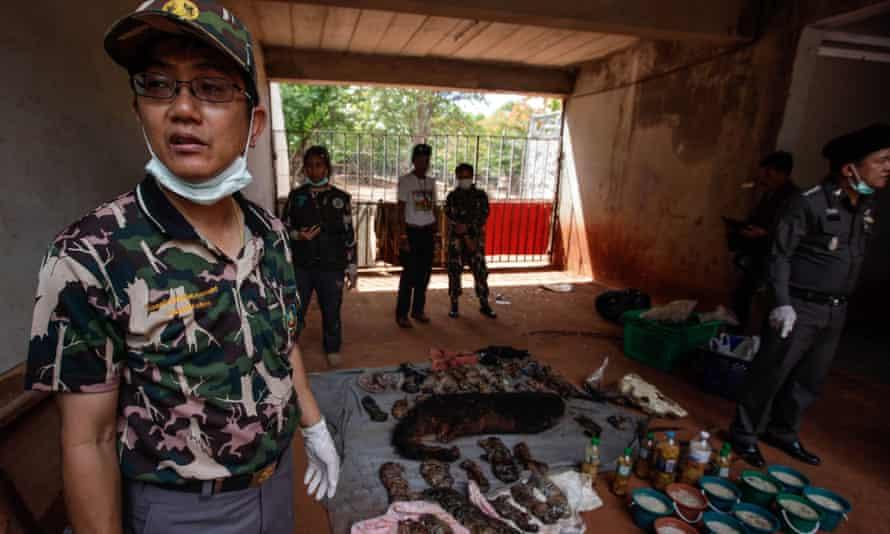 Adisorn Noochdumrong at the Tiger Temple
