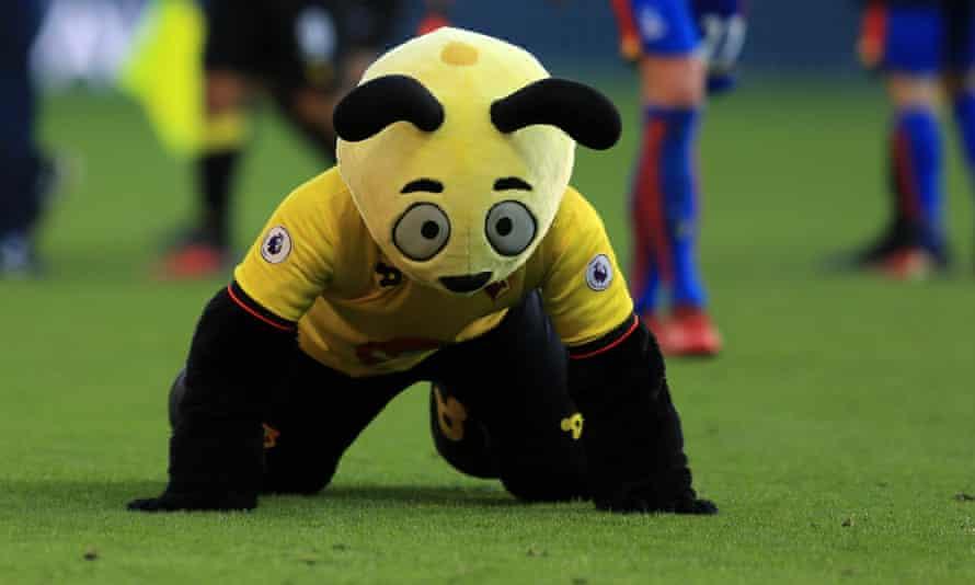 Harry the Hornet, Watford's club mascot