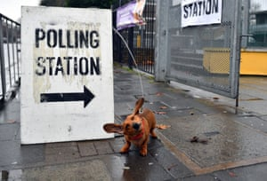 A dachshund outside a polling station in London