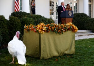 One of the turkeys walks in the Rose Garden while Donald Trump speaks with Melania by his side.