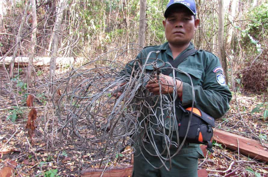 Patrol ranger with confiscated wire snares, Mondulkiri Cambodia.